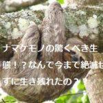ナマケモノの驚くべき生態!?なんで今まで絶滅せずに生き残れたの??