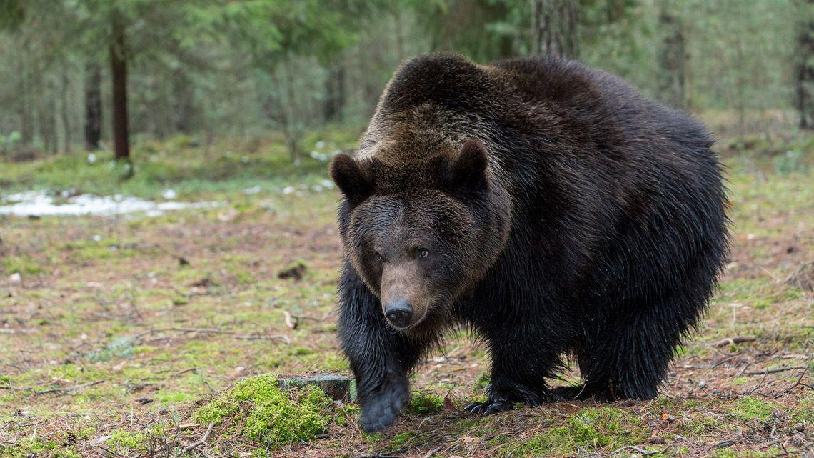鈴やラジカセでは不十分!?森や山に入る前に知ってほしい熊などの野生動物対策!