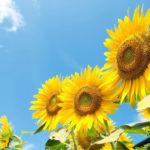 日本最強の冷夏は8月でも最高気温18.6℃!?日本で最も涼しかった夏と最も気温が高かった最強の真夏を比較してみた